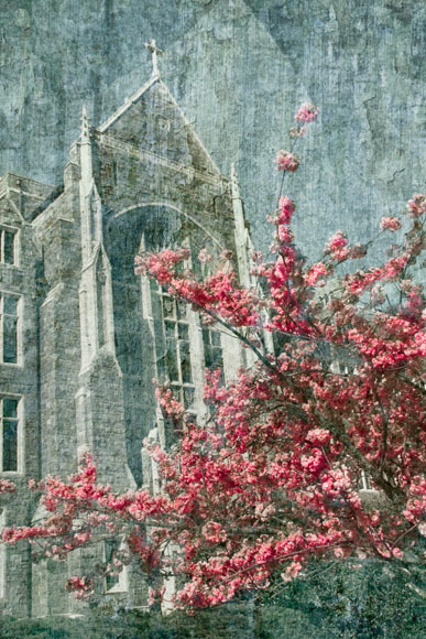 Spring Blossoms. Georgetown University, Washiington D.C. ref# 5919_fresco